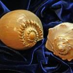 """""""Shell Duo"""" by LyndaLehmann"""