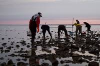 Early Morning Oystering