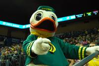 Duck at Matt Arena