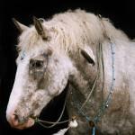 """""""Indian Pony"""" by LynnR"""