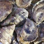 """Brewster Oysters - November 2009"" by brucetopher"