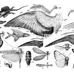 """Evolution of Flight"" by GilWarzecha"