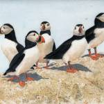 """Puffins Loafin"