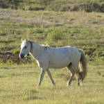 """""""White horse"""" by BethsSpecialMoments"""