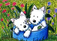 Flowerbed Westies