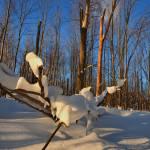 """Snow Sculpture"" by Freezeframe"