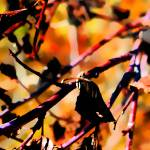 """""""Memories of Autumn     0653"""" by BarbaraLin"""