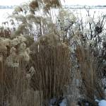 """Winter Grass"" by PatriciaHeise"