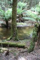 Mount Field National Park 2644
