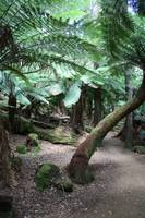 Mount Field National Park 2686