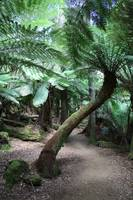 Mount Field National Park 2687