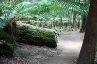 Mount Field National Park 2688