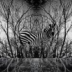 """Animal Poster Series (Zebra)"" by NurizaSaputra"