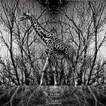 """Animal Poster Series (Giraffe)"" by NurizaSaputra"