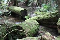 Mount Field National Park 2698