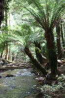 Mount Field National Park 2707