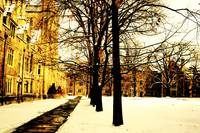 University Law Quad in Winter