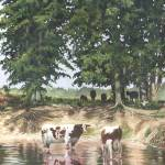 """Cows in a Summer Pond"" by powellfineart"