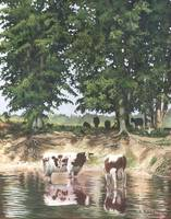 Cows in a Summer Pond