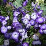 """""""Pop of purple"""" by BethsSpecialMoments"""