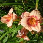"""""""Peach flowers"""" by BethsSpecialMoments"""