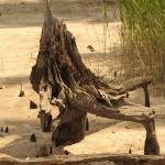 """driftwood throne"" by BethsSpecialMoments"