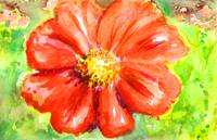 Red Gerber Daisy Watercolor