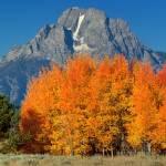 """Mt. Moran"