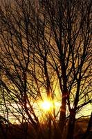 autumn sun behind branches of bare tree