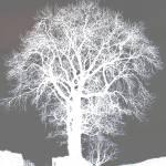 """""""treecold"""" by Wizz2012"""