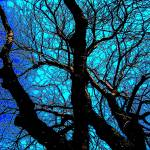 """treeblue"" by Wizz2012"