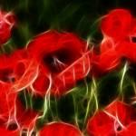 """""""Poppies"""" by ImageMonkey"""