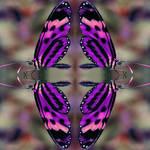 """""""butterfly"""" by ImageMonkey"""