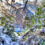 """HDR Snow V"" by hugobaptista"