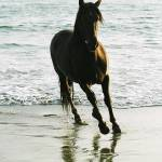 """Waters Edge Andalusian"" by LynnR"