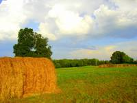 hay field of Georgia