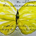 """Yellow Buttercup Butterfly With Quote Overlay"" by nataliecardon"