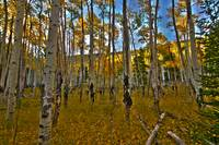 COLORADO ASPEN HDR