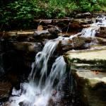 """Monte Sano Spring Stream"" by jaredwcarter"