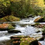"""Smoky Mountain Autumn Creek"" by jaredwcarter"