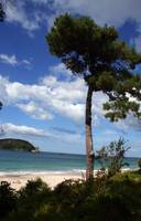 Hahei beach, Coromandel peninsula, North Island, N