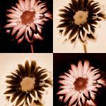 """""""Four Faux Flowers"""" by PsyonicStudios"""