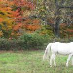 """White Horse Rainbow Autumn"" by hiddensightphoto"