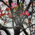 """Blossoms"" by jennifercahoon"