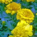 """Yellow on Cools"" by jennifercahoon"
