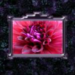 """Dahlia 7 Framed"" by Peter-A-Kopher"