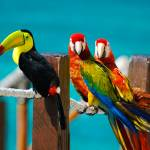 """Xel-Ha Birds"" by trevorsmiley"