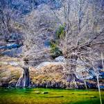 """hamilton pool feb-1-5"" by JThomasDukePhotography"