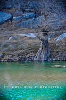 hamilton pool feb-1-6 logo