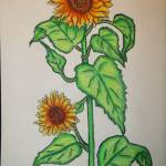 """Sun flower"" by KrissieMarie"
